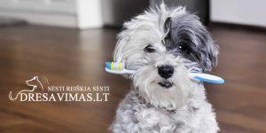Šunų dantų priežiūra